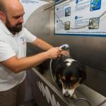 Hund waschen