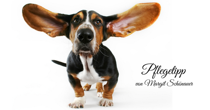 Ohrenpflege1