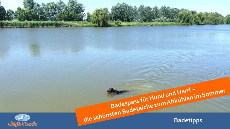 Badeteiche_Wien