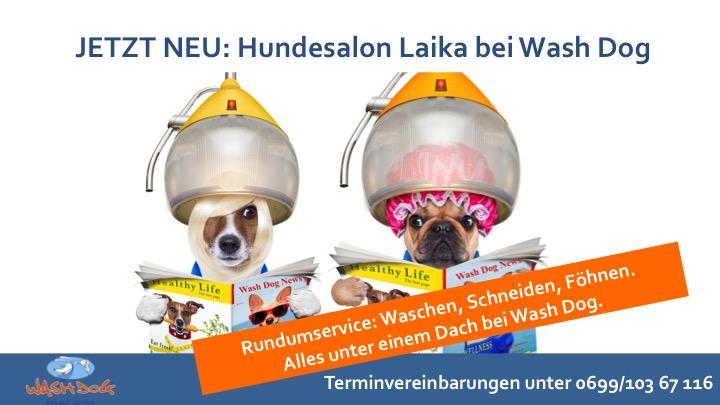 Hundefriseur bei Wash Dog