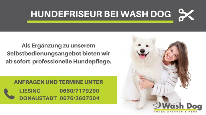 Hundefriseur INFOSCREEN (1)